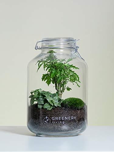 Flaschengarten Jar-4 DIY-Set/Terrarium/Biotop/Ökosystem