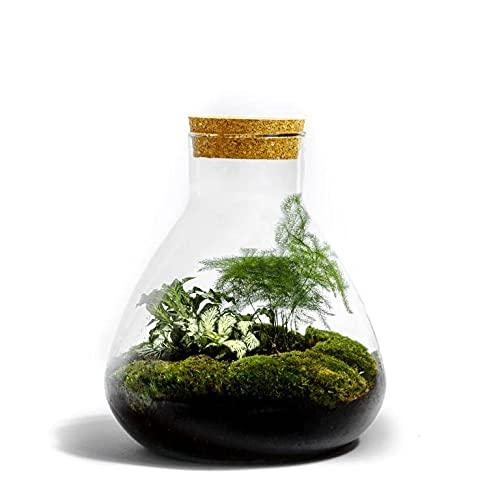Flaschengarten von Botanicly