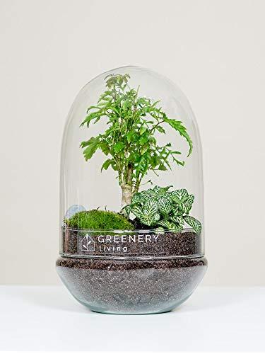 GreeneryLiving EGG-4 Premium DIY-Flaschengarten